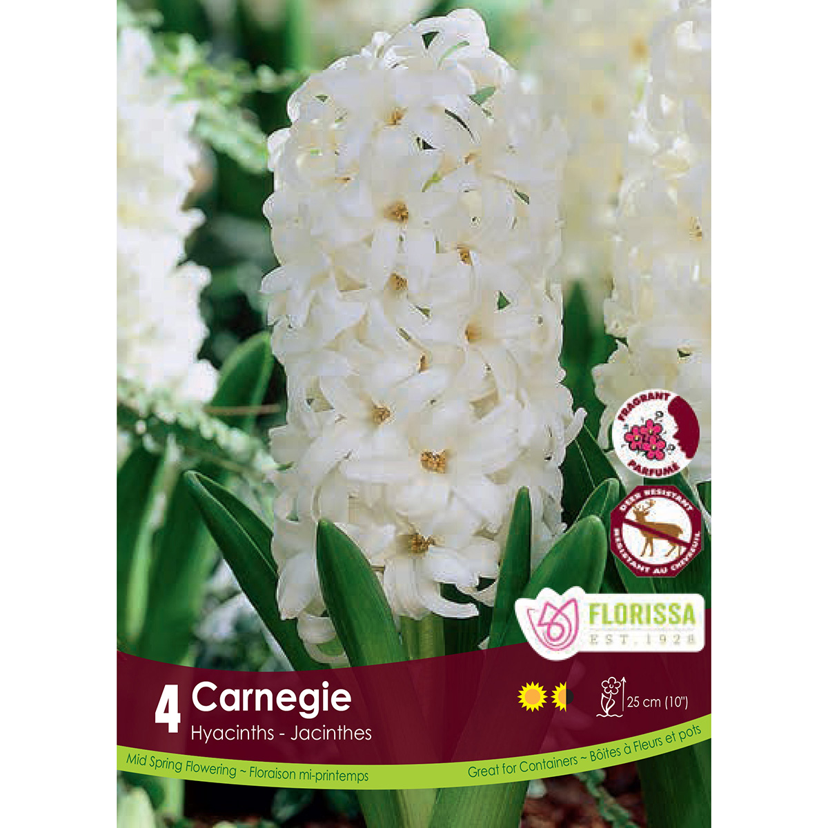Hyacinth 'Carnegie' Bulbs 4Pk
