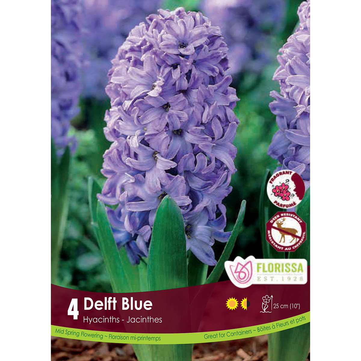 Hyacinth 'Delft Blue' Bulbs 4Pk