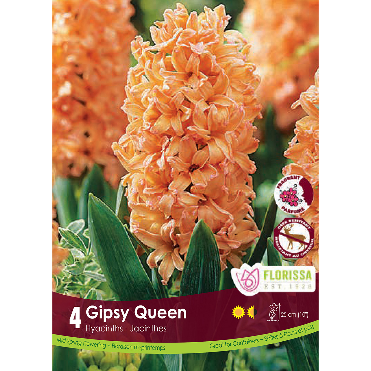 Hyacinthus 'Gipsy Queen' Bulbs 4PK