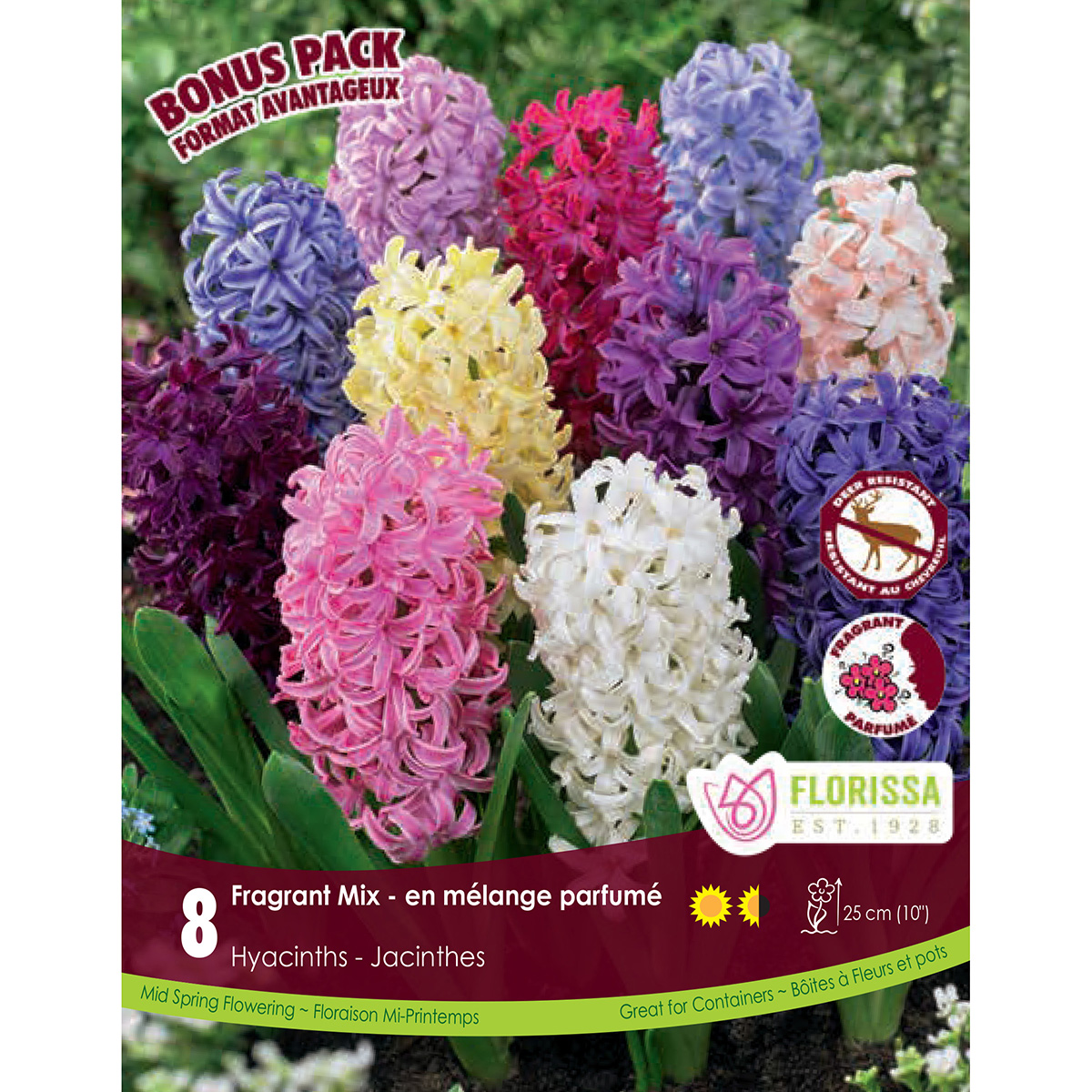 Hyacinth 'Fragrant Mix' Bulbs 8PK
