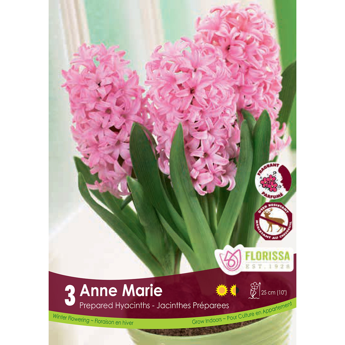 Prepared Hyacinth 'Anne Marie' Bulbs 3Pk