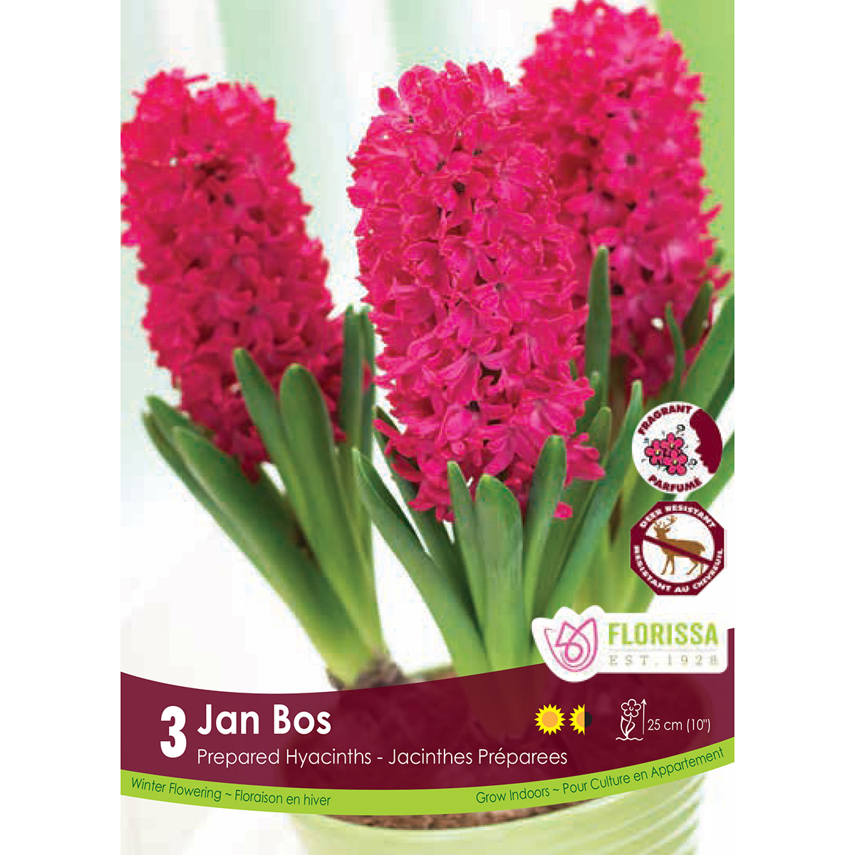 Prepared Hyacinth 'Jan Bos' Bulbs 3Pk