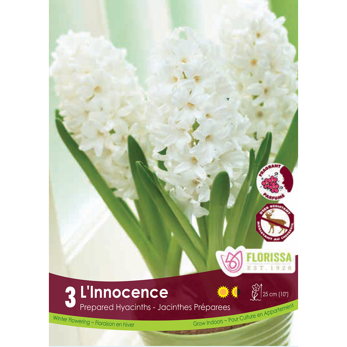 Prepared Hyacinth 'L'Innocence' Bulbs 3Pk