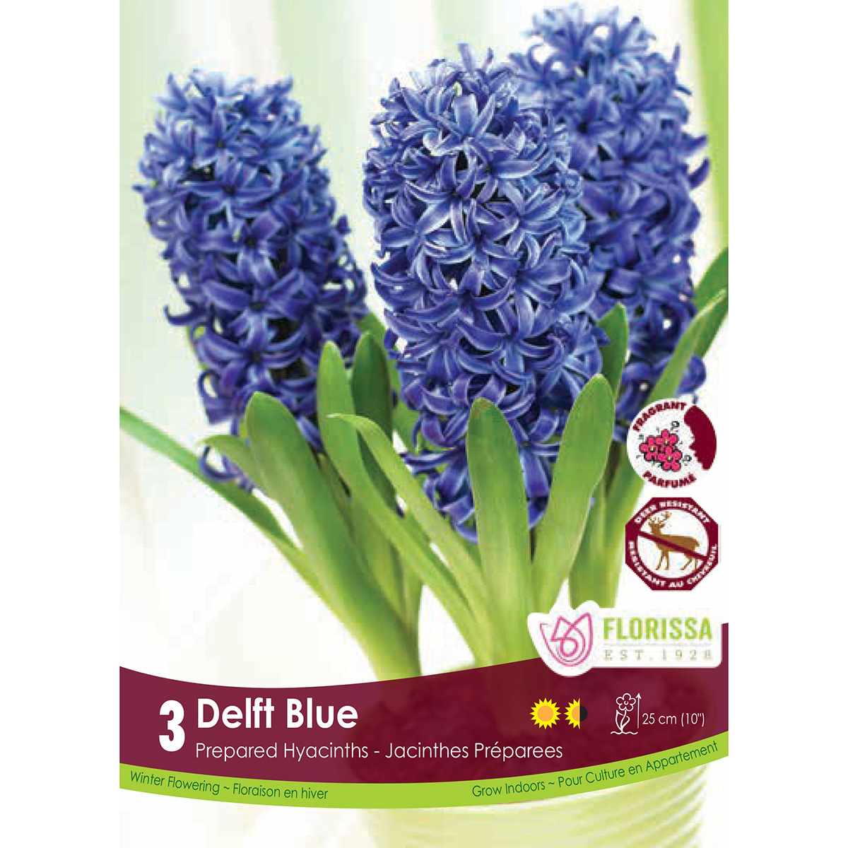 Prepared Hyacinth 'Delft Blue' Bulbs 3Pk