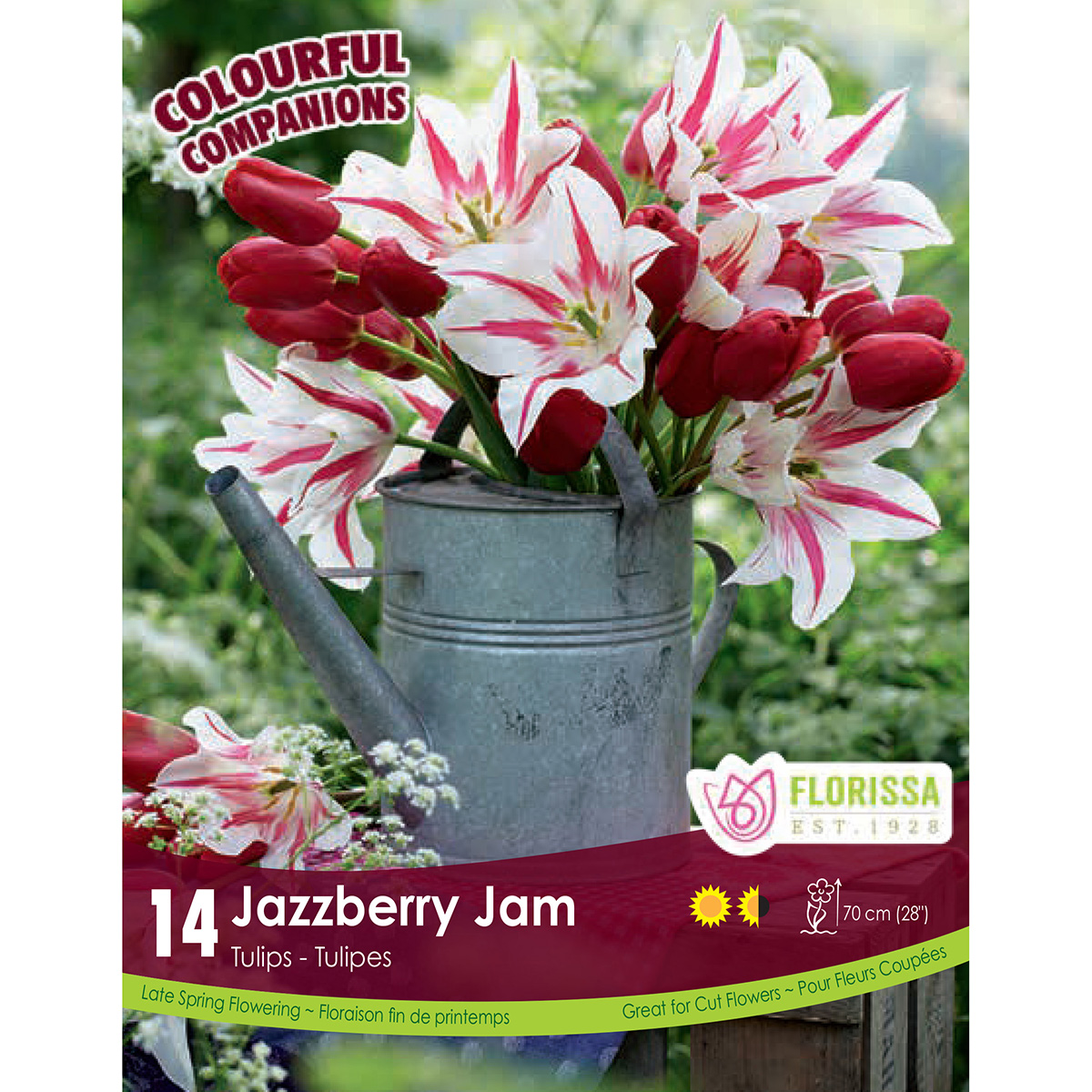 Colourful Companions Tulipa 'Jazzberry Jam' Bulbs