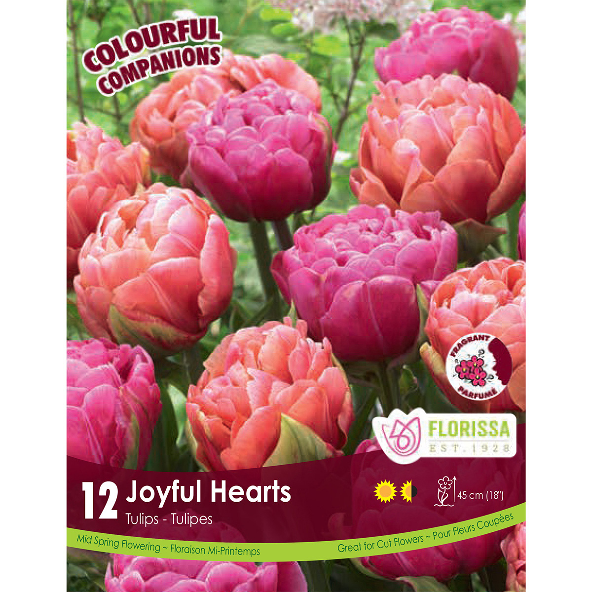 Colourful Companions Tulipa 'Joyful Hearts' Bulbs