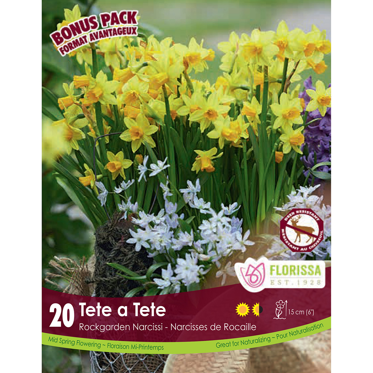 Mammoth Pack Narcissus 'Tete a Tete' Bulbs