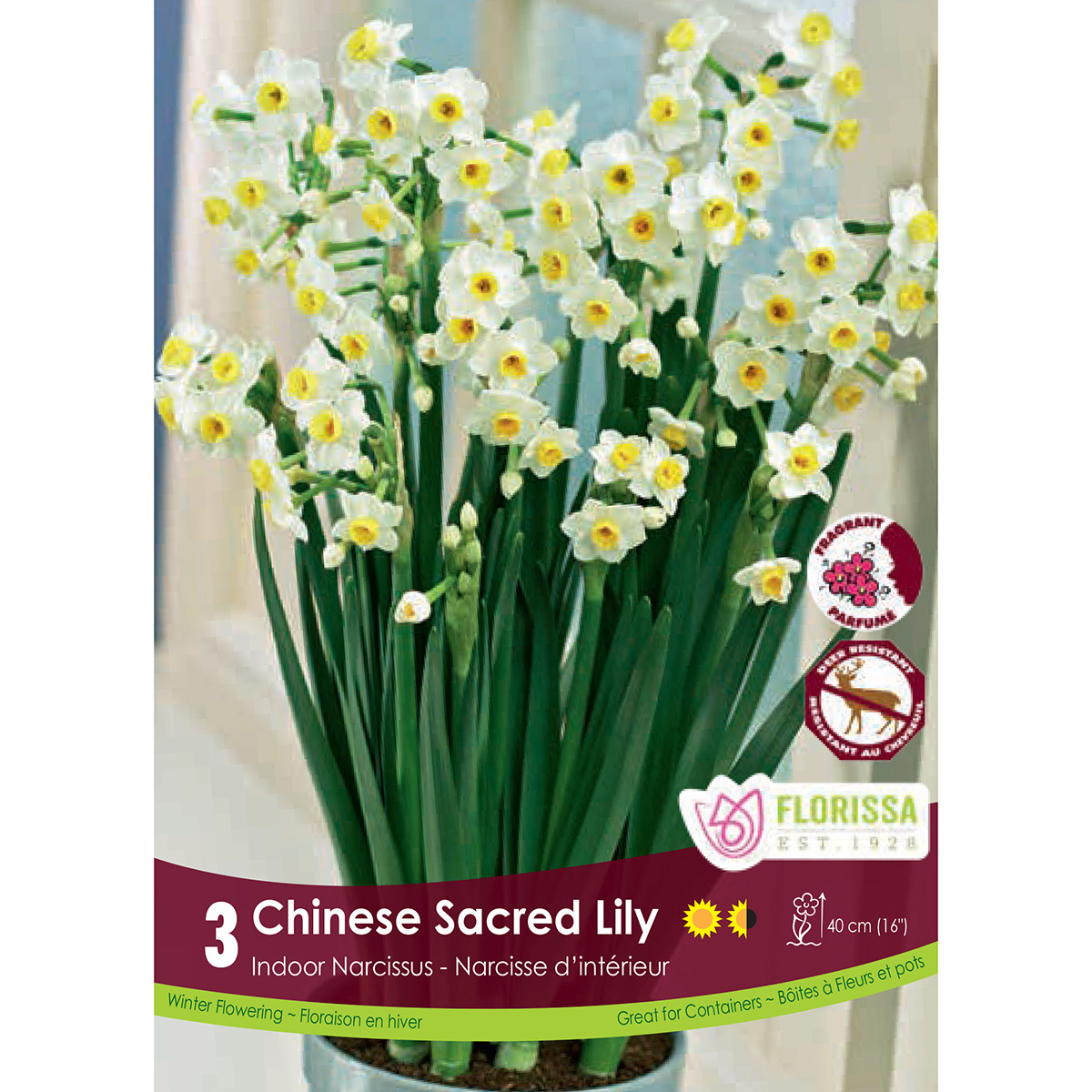 Narcissus 'Chinese Sacred Lily' Bulbs