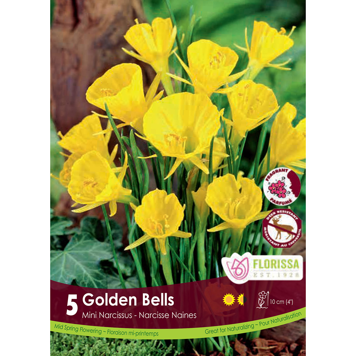 Narcissus 'Golden Bells' Bulbs