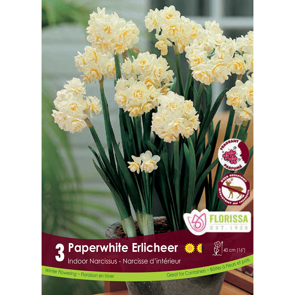 Narcissus 'Paperwhite Erlicheer' Bulbs