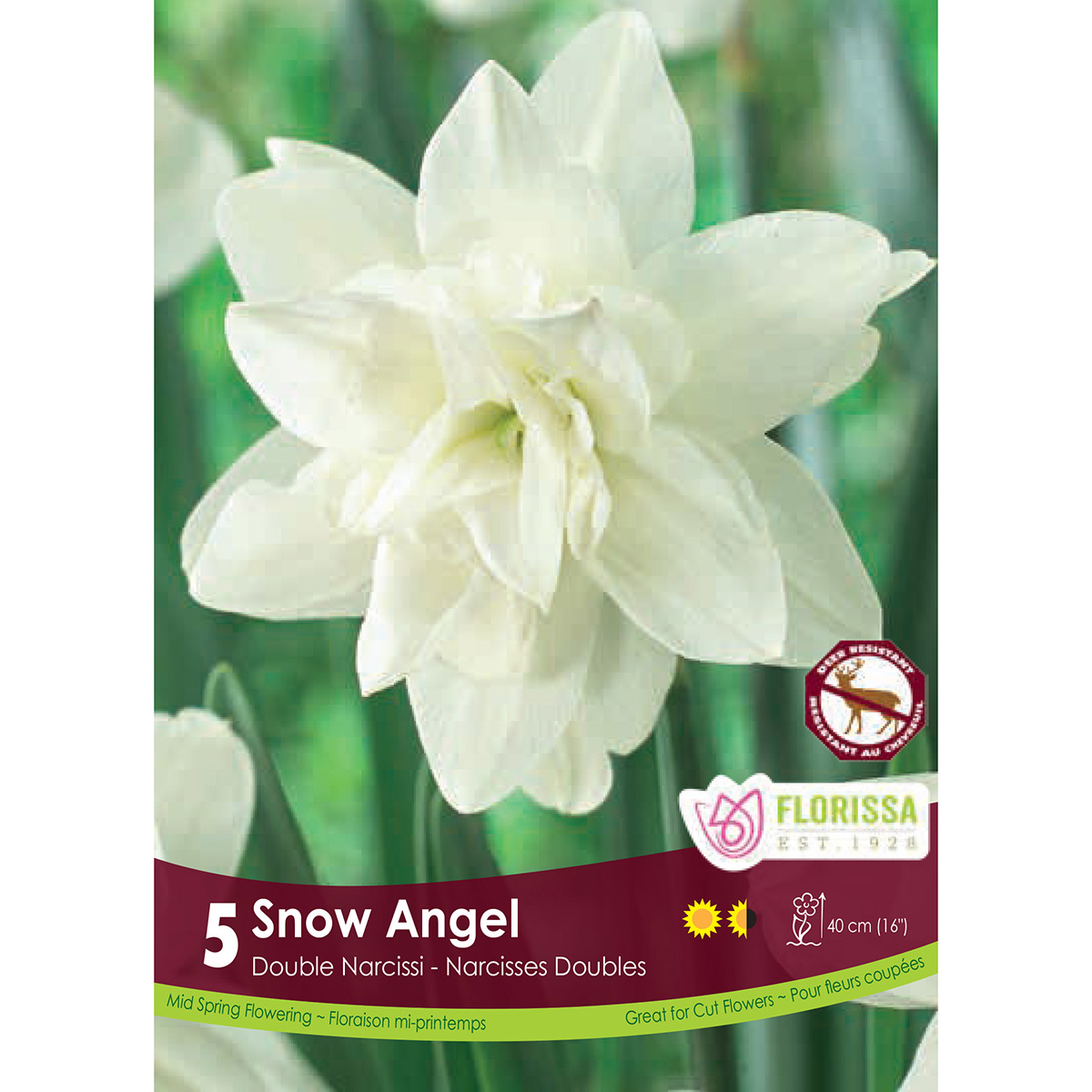 Narcissus 'Snow Angel' Bulbs
