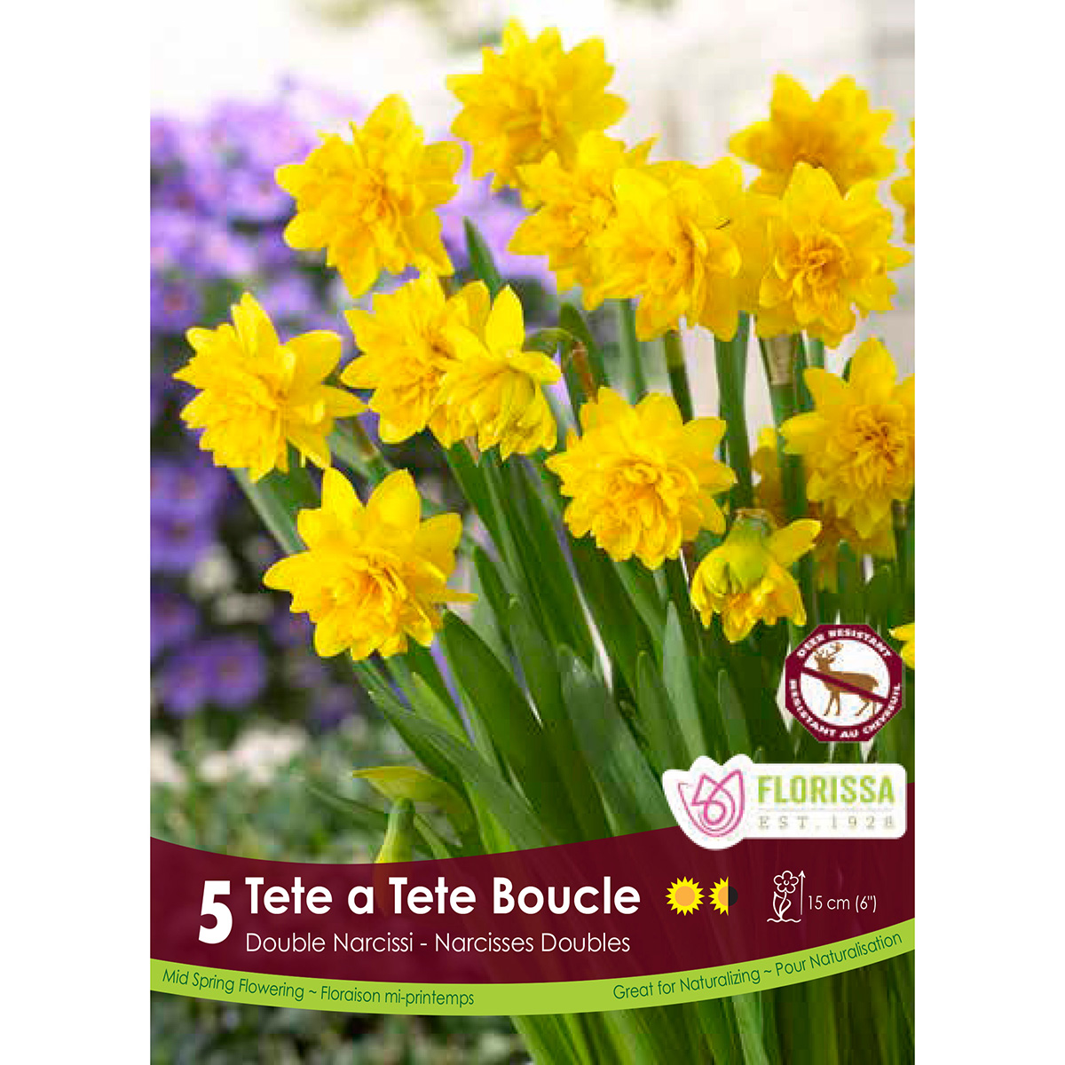 Narcissus 'Tete a Tete Boucle' Bulbs