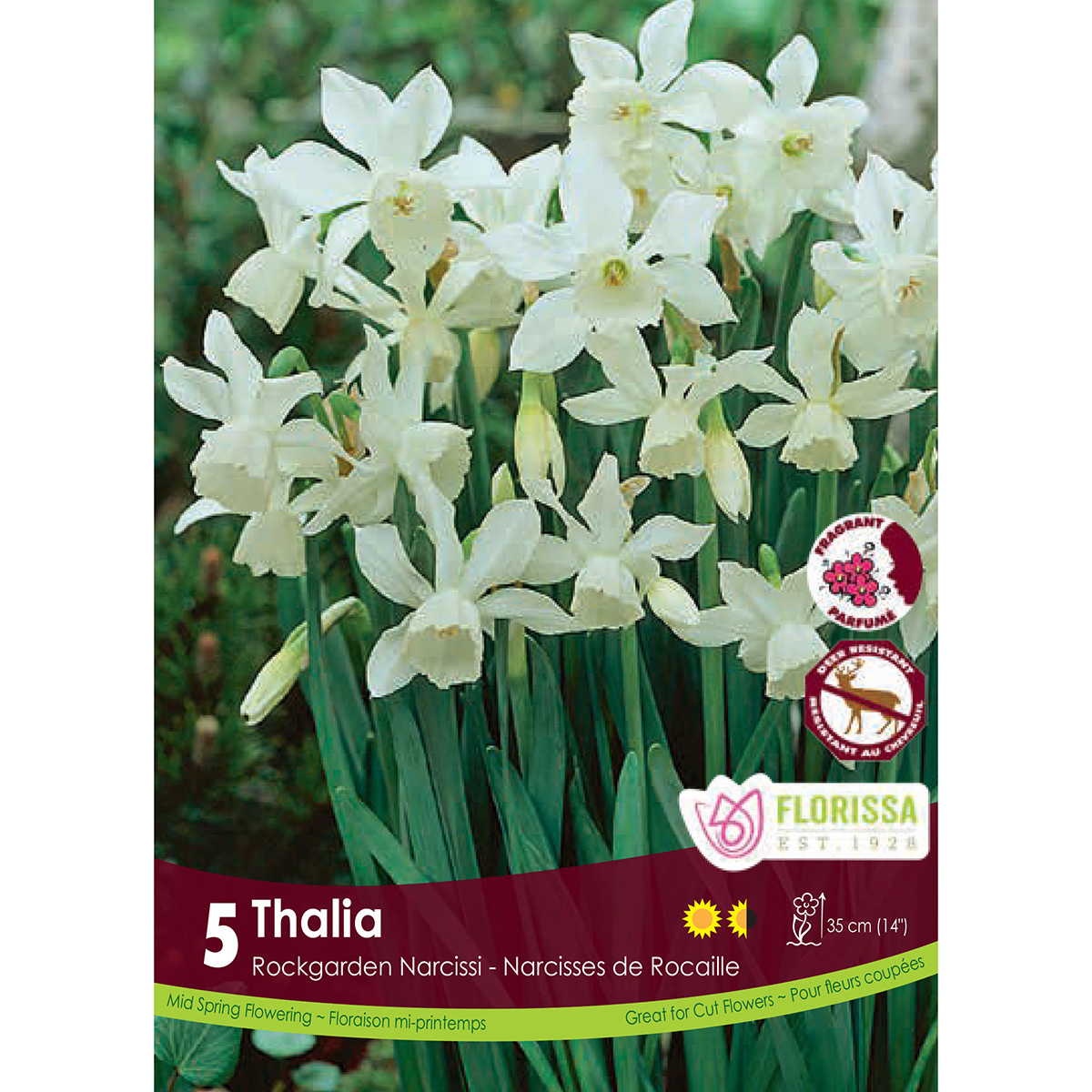 Narcissus 'Thalia' Bulbs