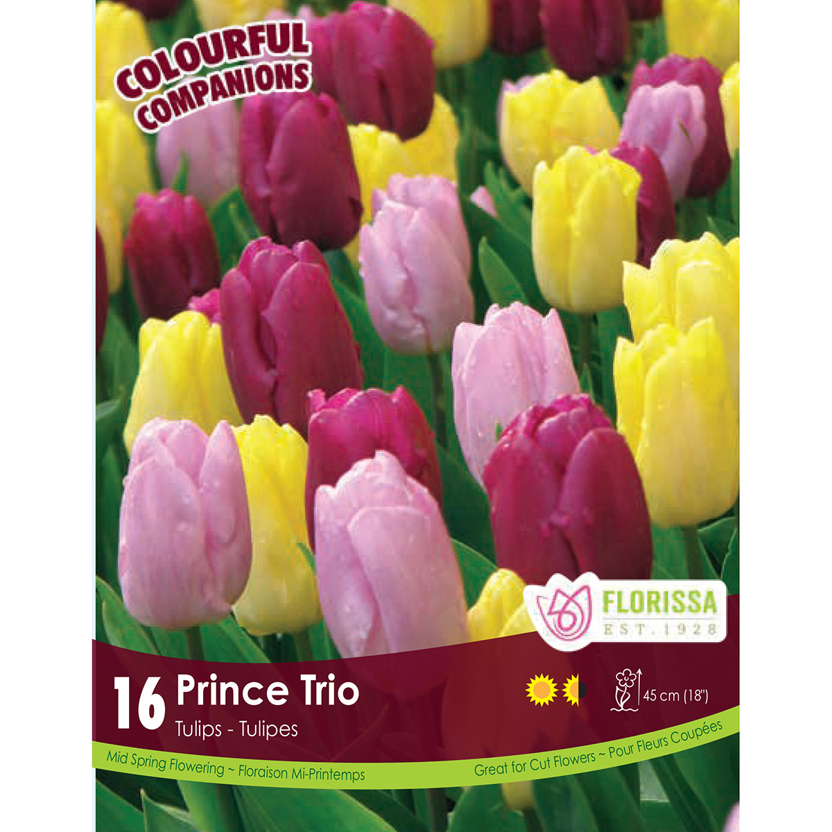 Colourful Companions Tulipa 'Prince Trio' Bulbs