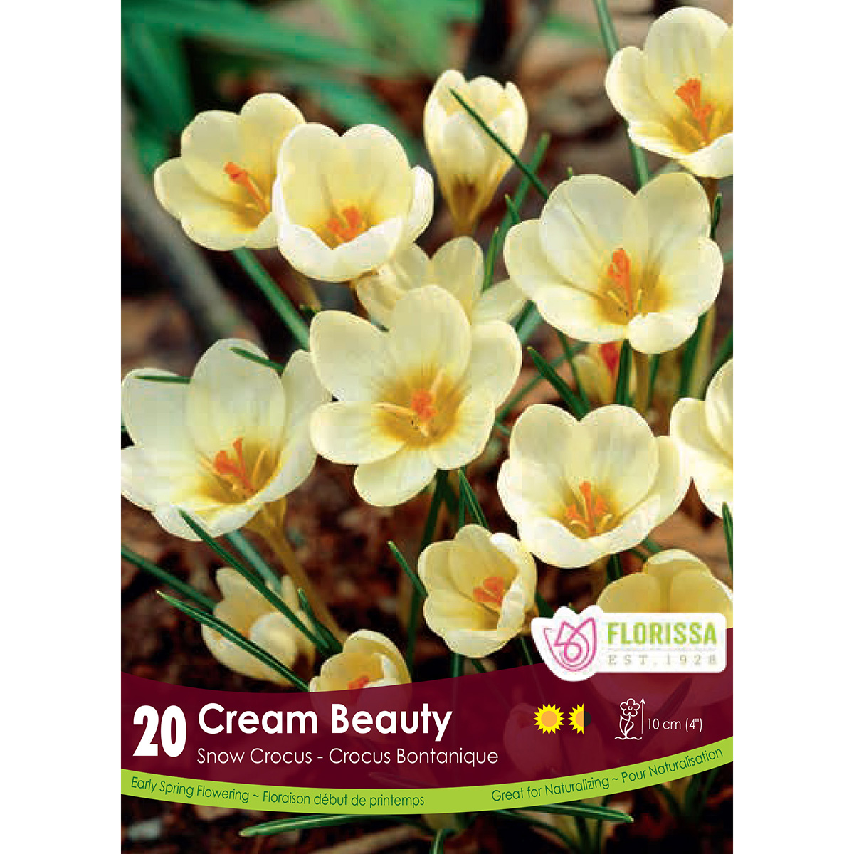 Bulb_Snowcrocus_Cream_Beauty.jpg