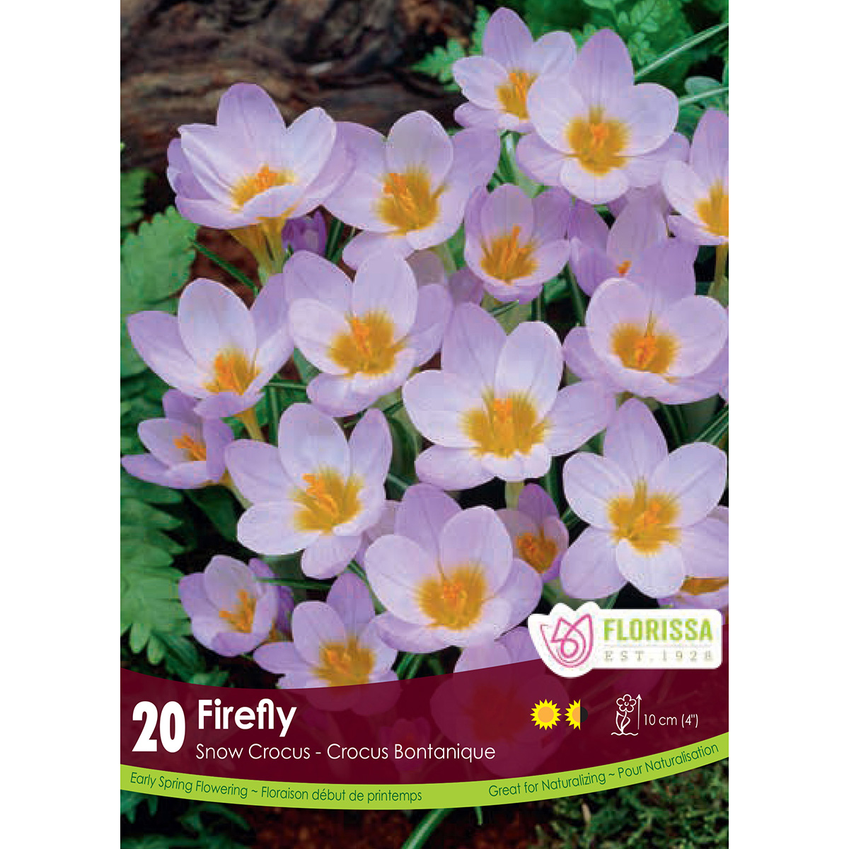 Crocus 'Firefly' Bulbs