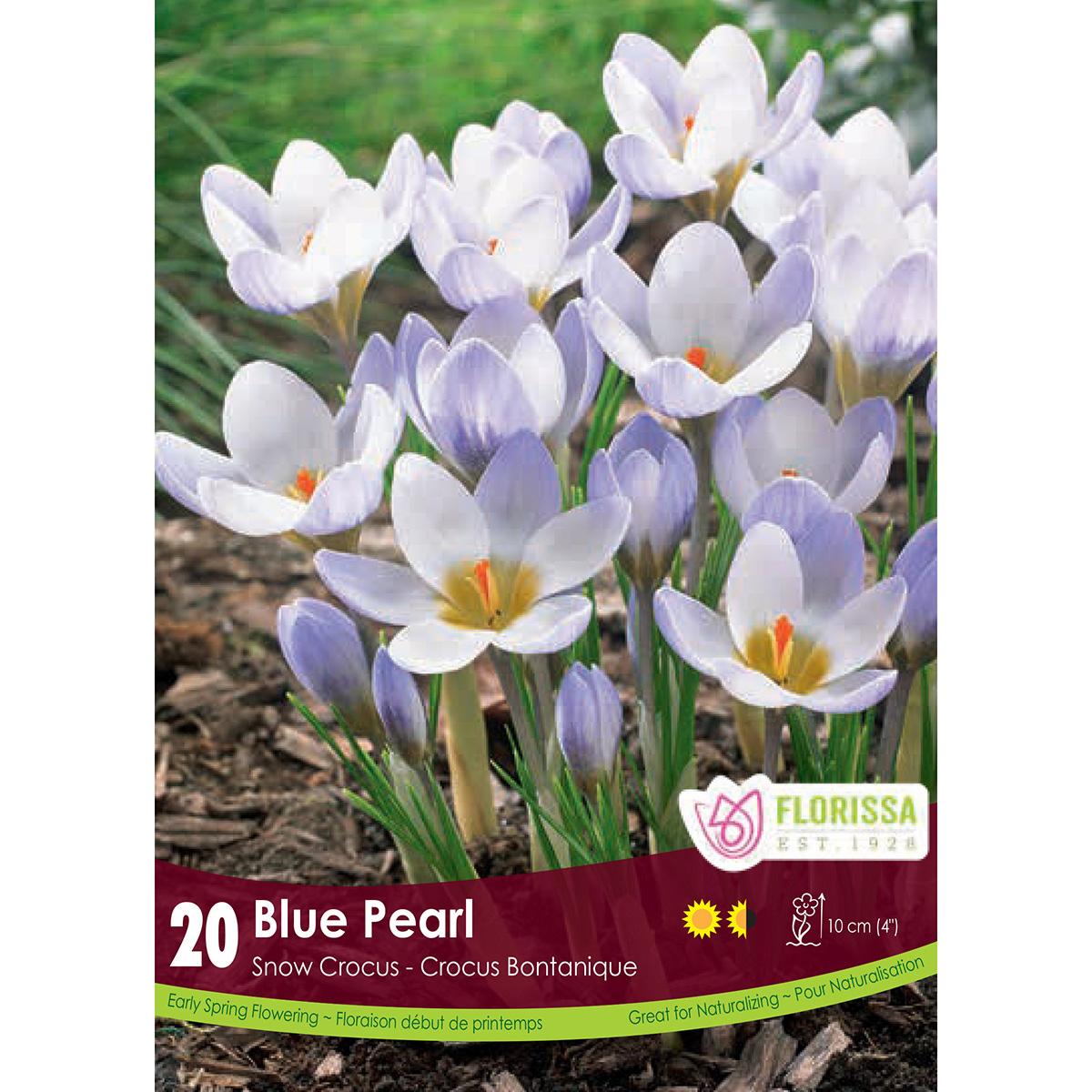 Crocus 'Blue Pearl' Bulbs