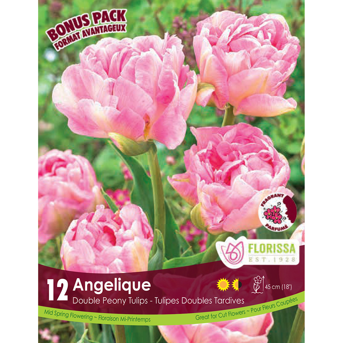 Mammoth Pack Tulipa 'Angelique' Bulbs