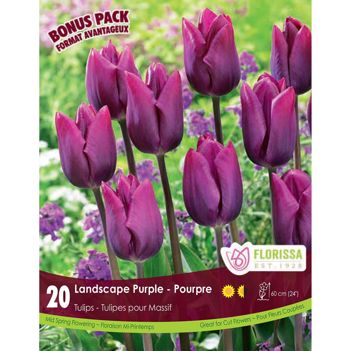Mammoth Pack Tulipa 'Landscape Purple' Bulbs