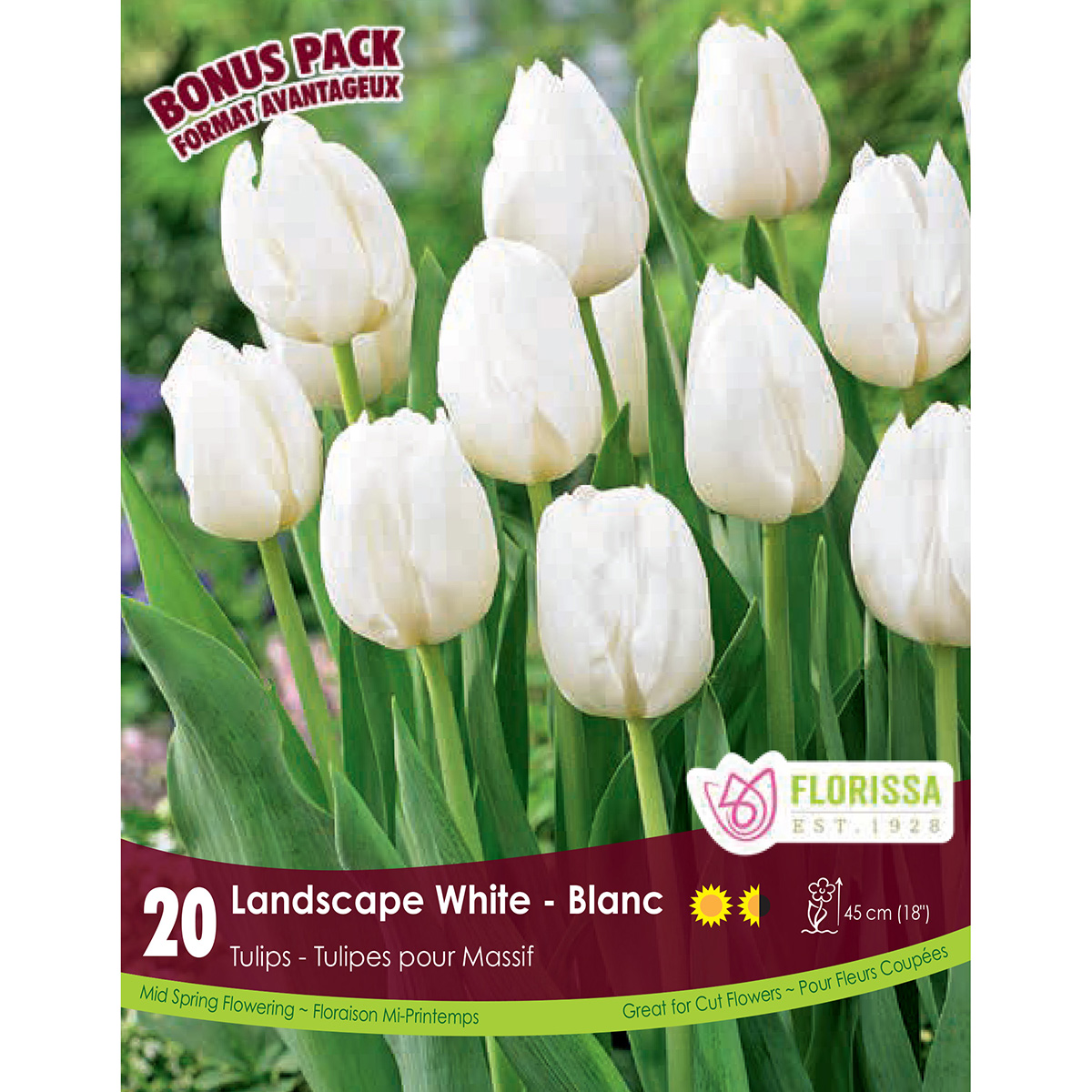 Mammoth Pack Tulipa 'Landscape White' Bulbs