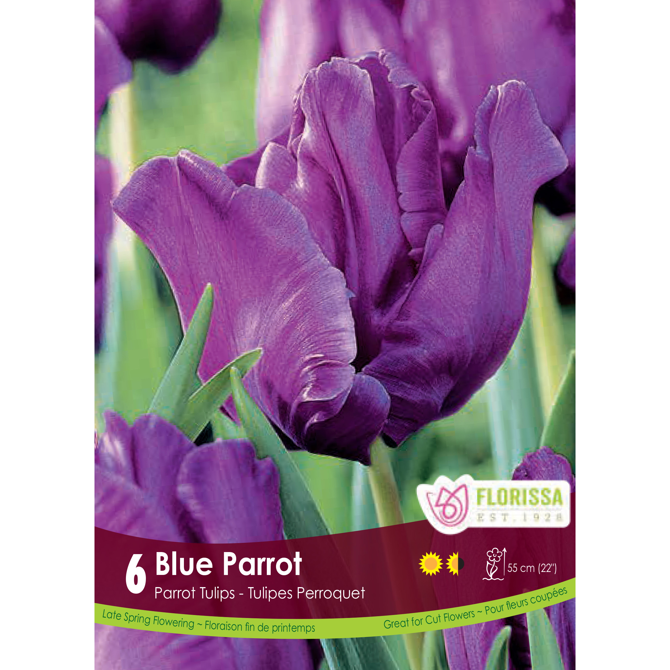 Tulipa 'Blue Parrot' Bulbs