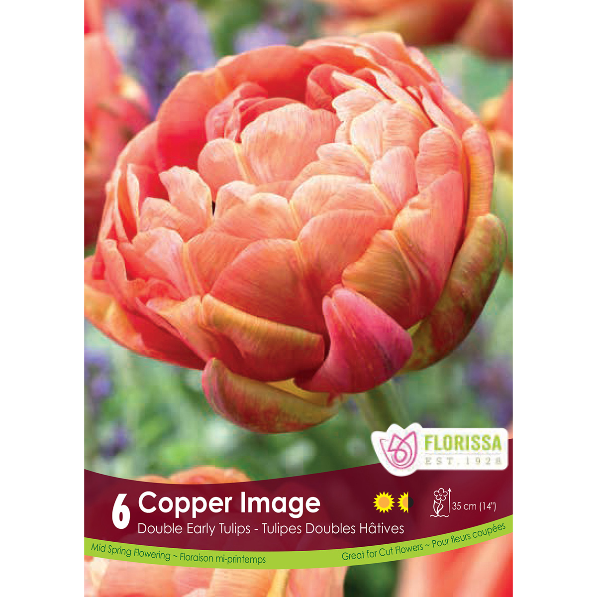 Tulipa 'Copper Image' Bulbs