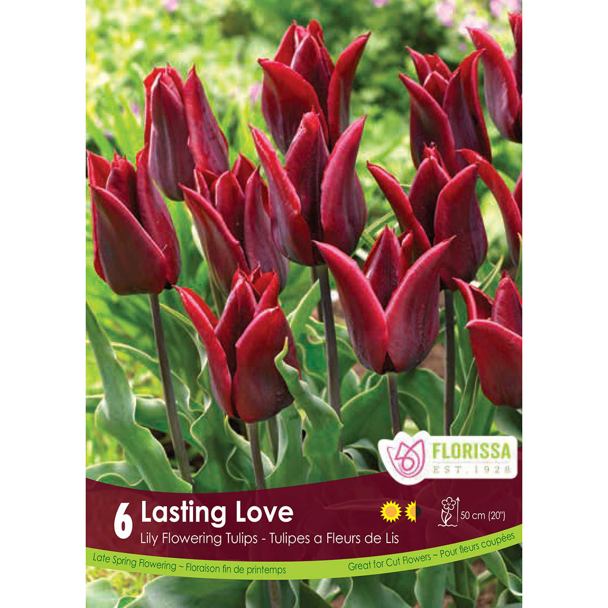 Tulipa 'Lasting Love' Bulbs