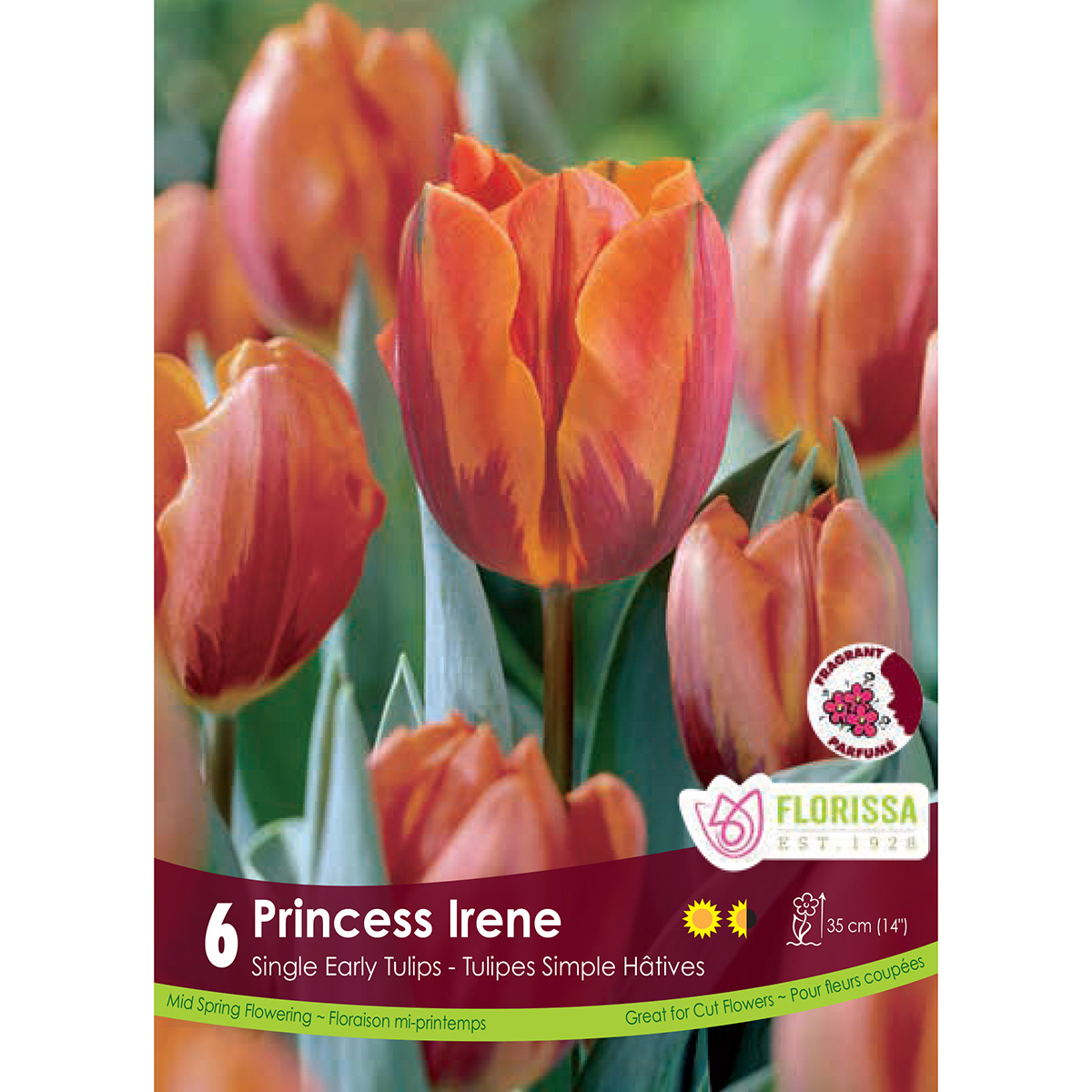 Tulipa 'Princess Irene' Bulbs