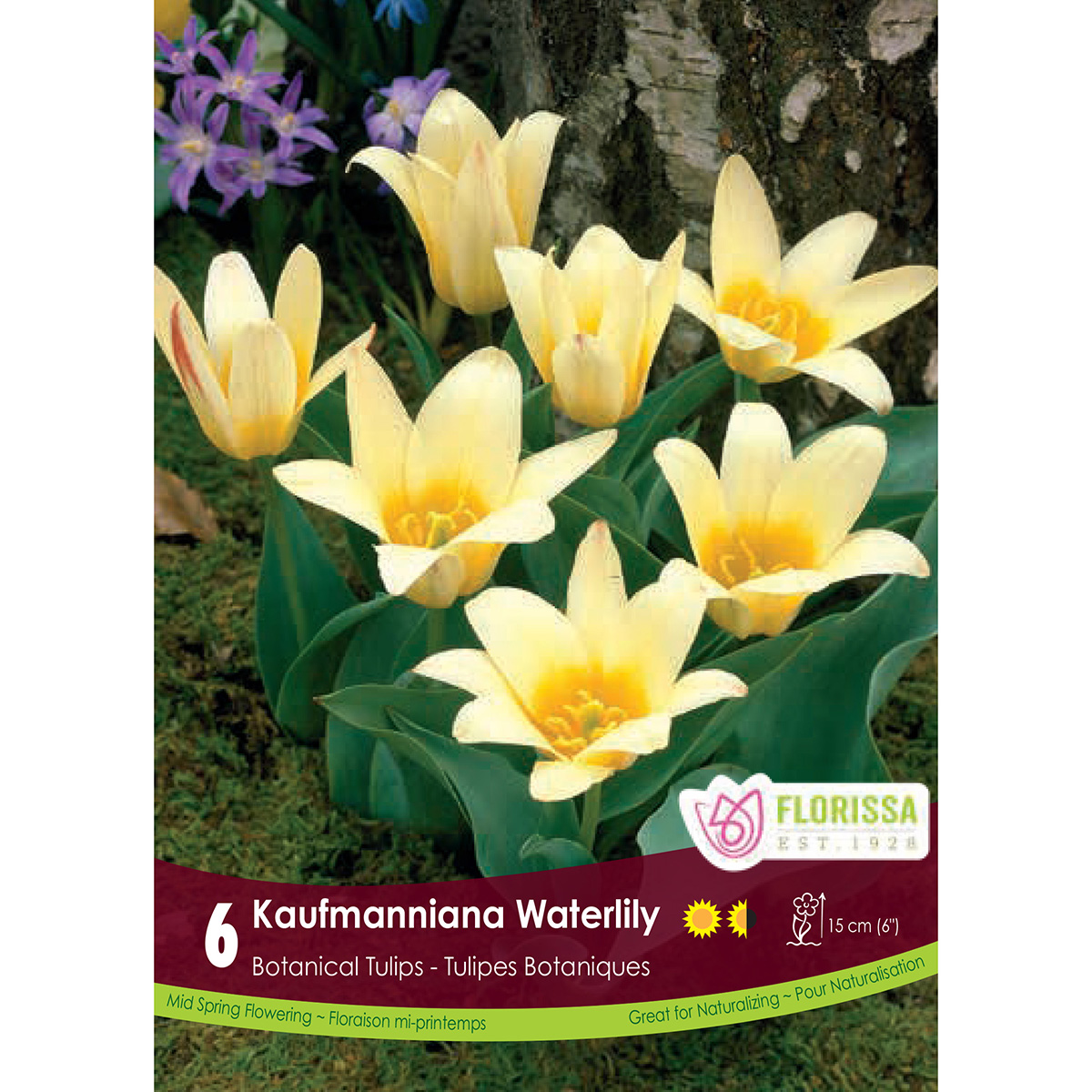 Tulipa 'Kaufmanniana Waterlily' Bulbs