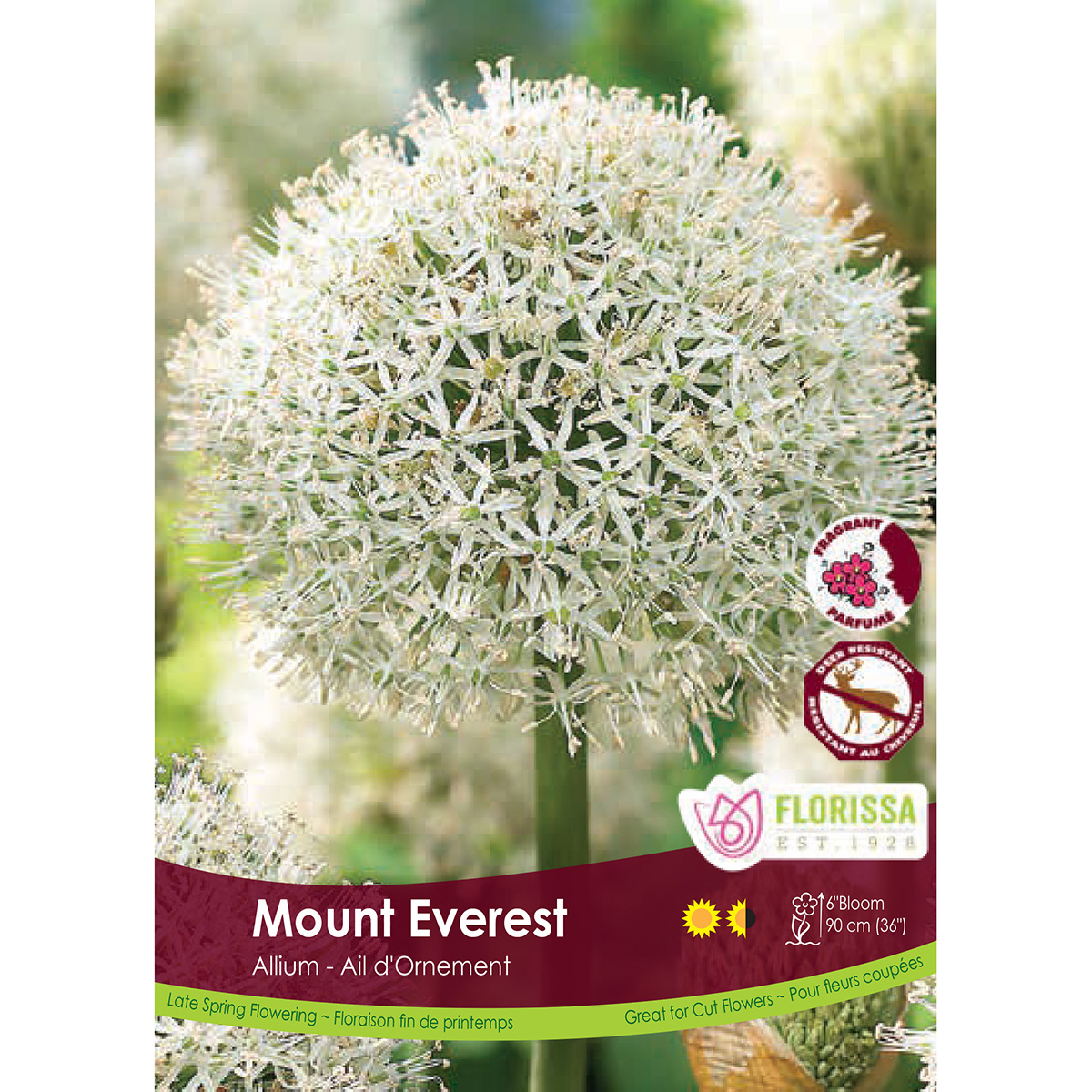 Perennial Flower Bulbs In Bulk Flowers Healthy