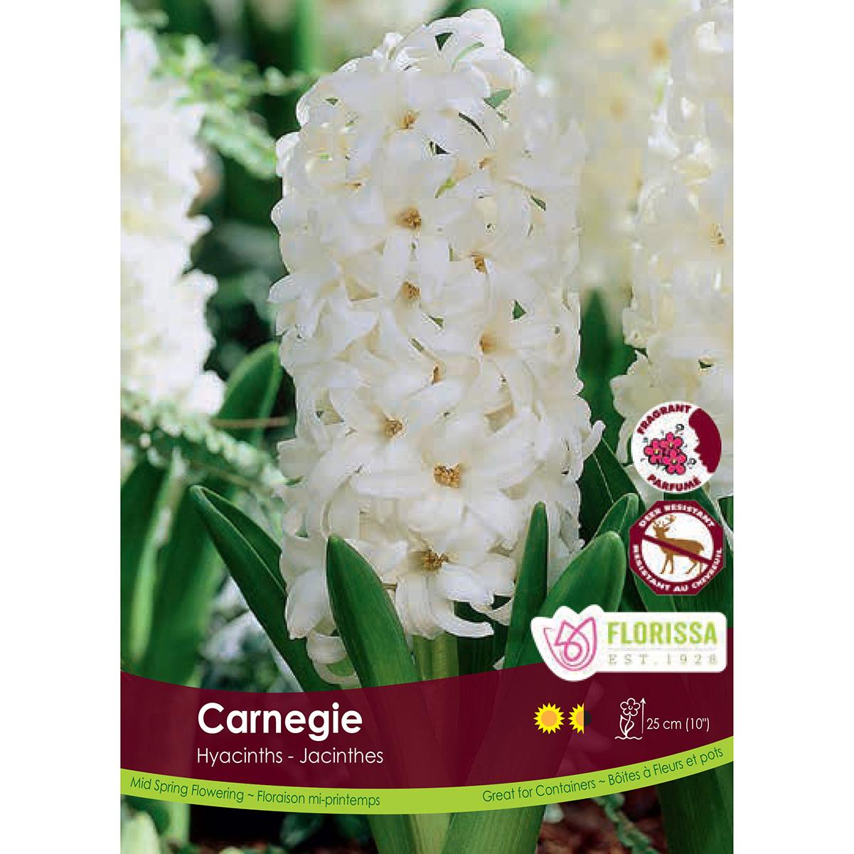 8adf3c626 Hyacinth  Carnegie  Bulk Bulbs