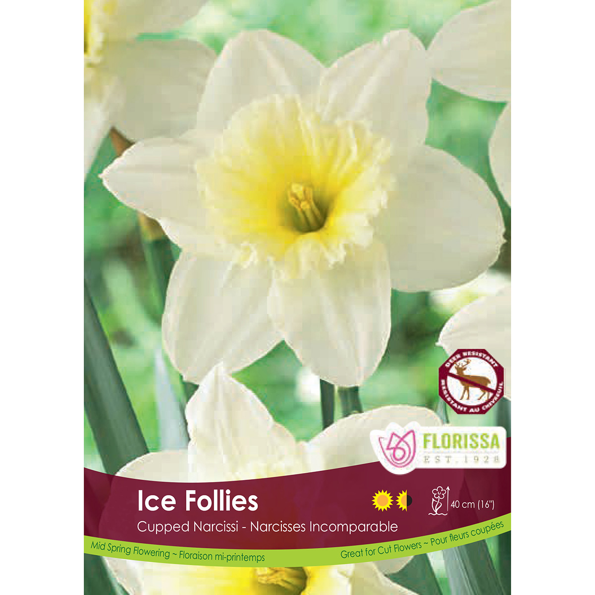 Bulk_Narcissus_Ice_Follies.jpg