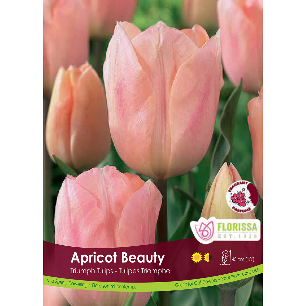 Tulipa 'Apricot Beauty' Bulk Bulbs