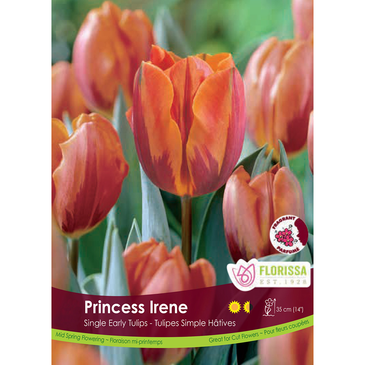 Tulipa 'Princess Irene' Bulk Bulbs