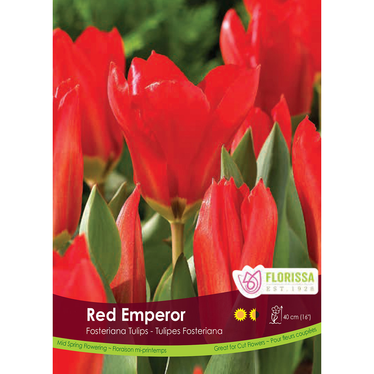 Tulipa 'Red Emperor' Bulk Bulbs