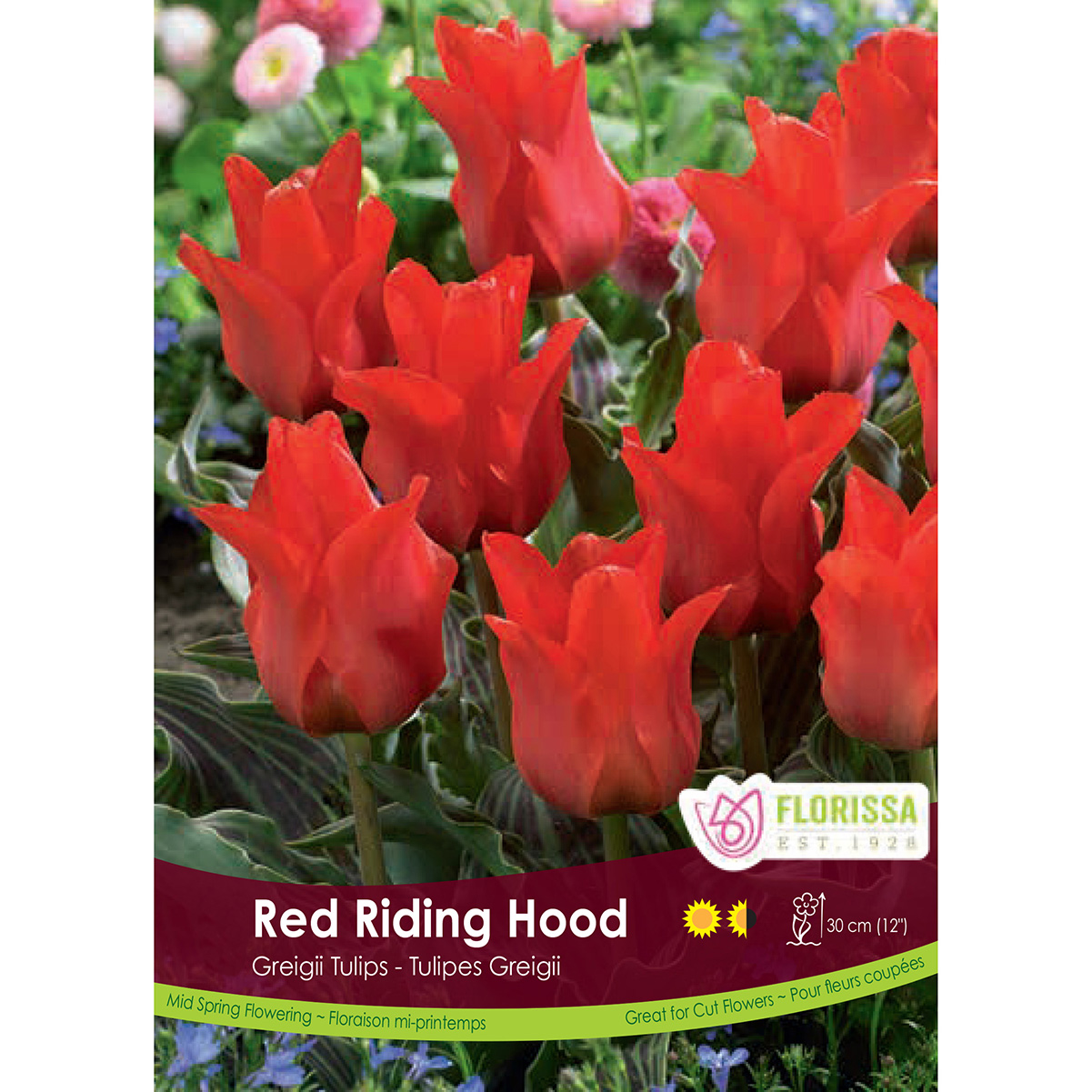 Tulipa 'Red Riding Hood' Bulk Bulbs