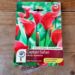 Calla Lily Captain Safari Bulbs