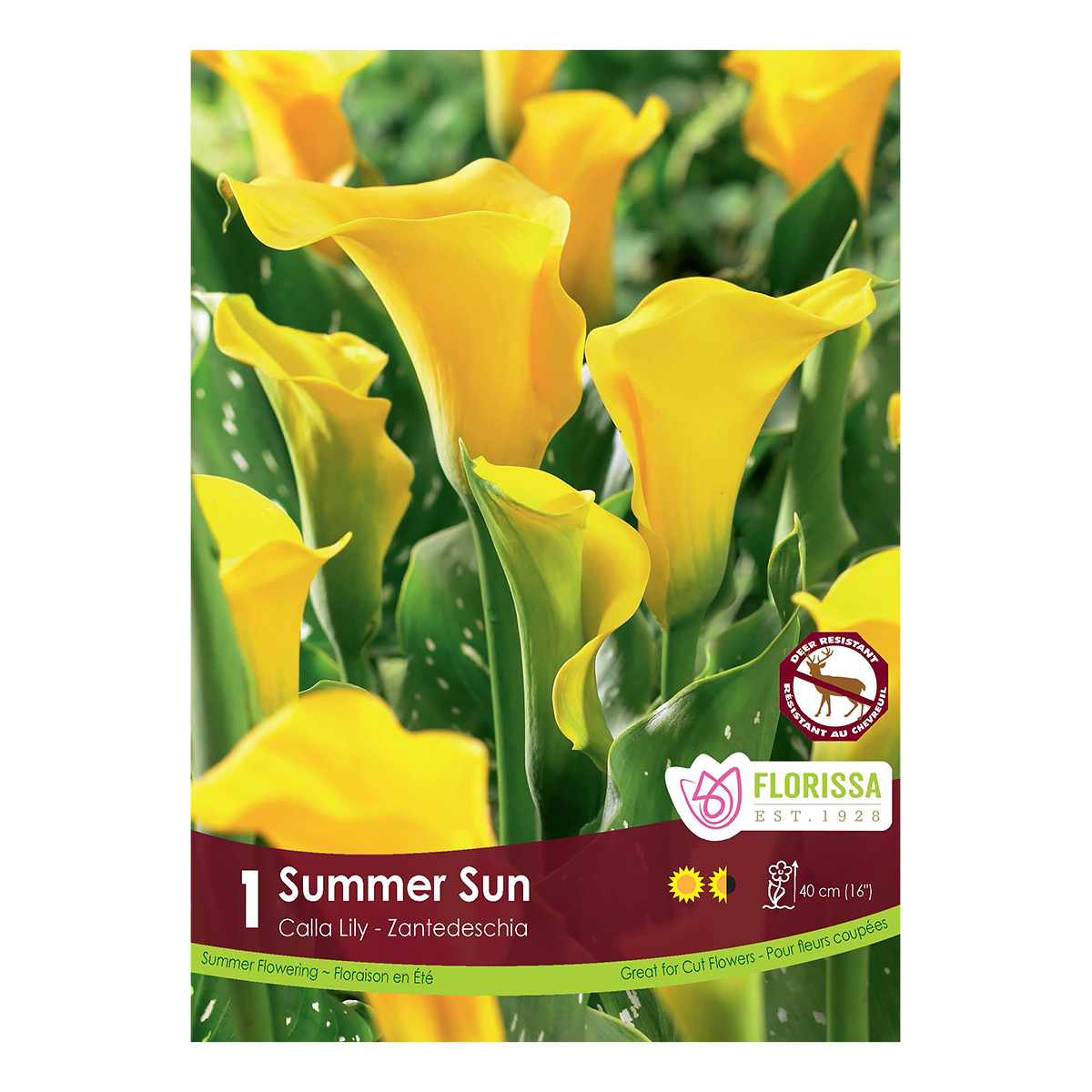 Zantedeschia Summer Sun Bulbs