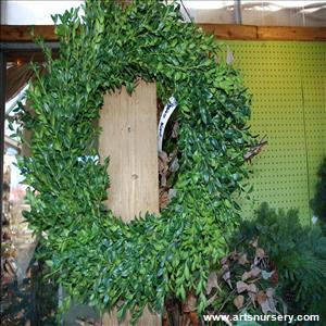 Christmas Wreath of Boxwood - Medium Round