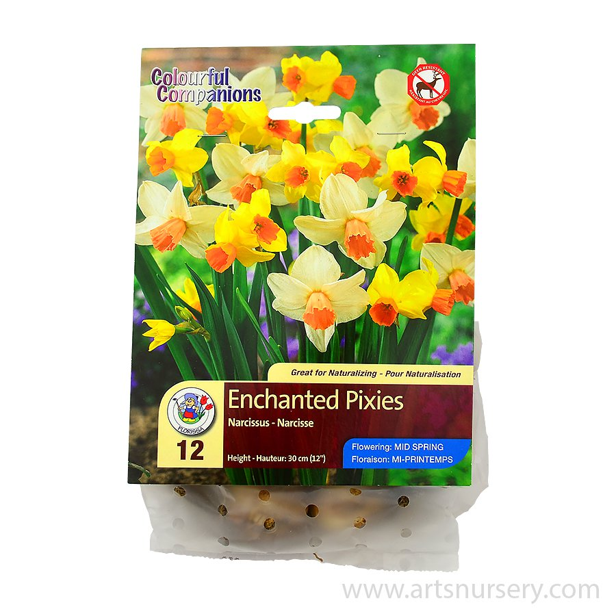 Colourful Companions 'Enchanted Pixies' Bulb Collection