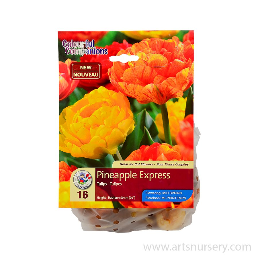 Colourful Companions 'Pineapple Express' Bulb Collection
