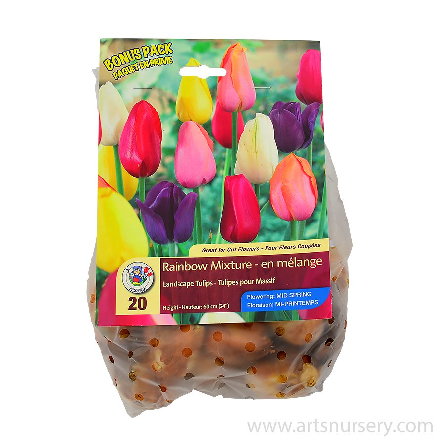 Tulipa 'Rainbow Mix' Bulbs