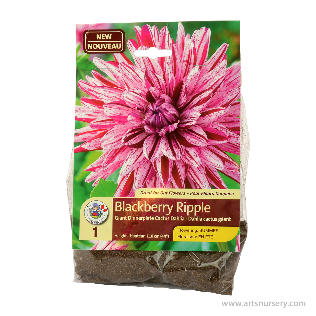 Dahlia Blackberry Ripple Tuber