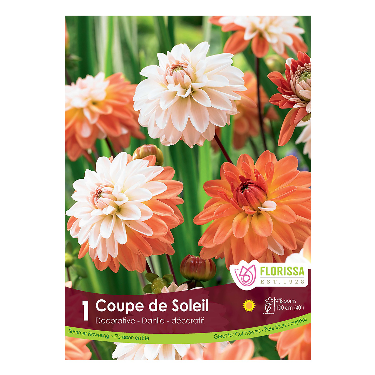 Dahlia_CoupeDeSoleil.jpg