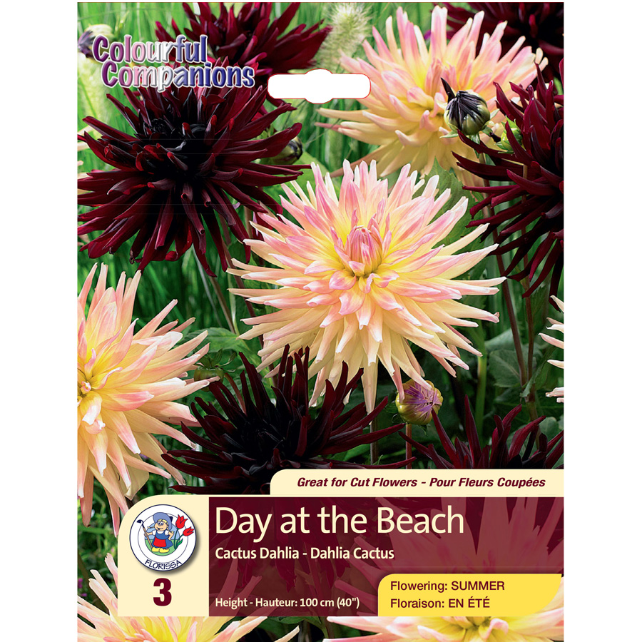 Dahlias Day at the Beach Colourful Companions Pack