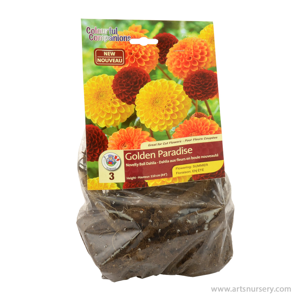 Dahlia Golden Paradise Colourful Companion Pack
