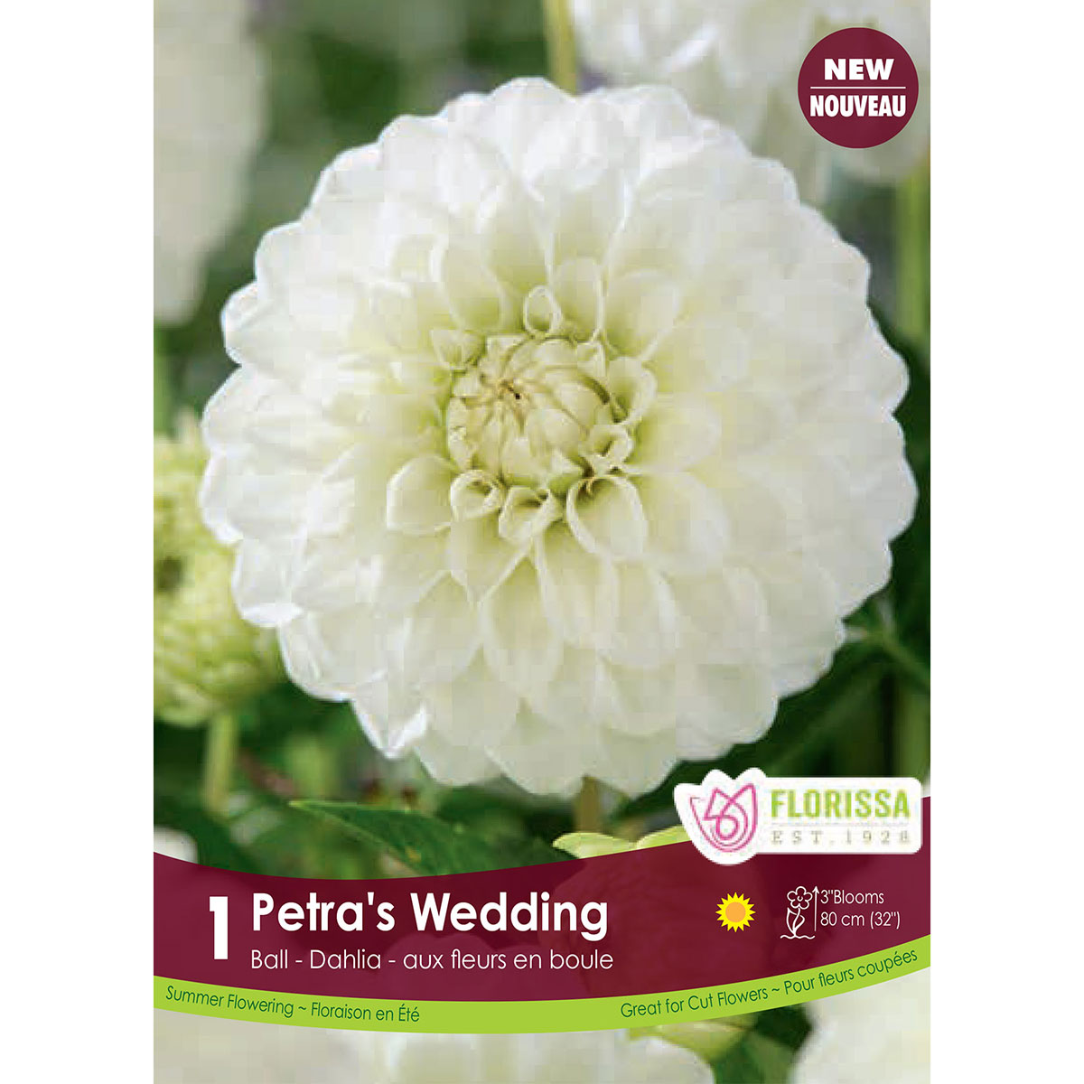 Dahlia 'Petra's Wedding Ball' Tuber