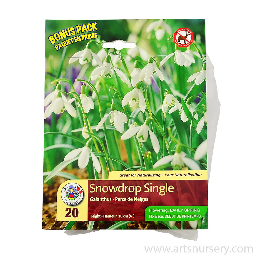 Mammoth Pack Galanthus 'Snowdrop Single' Bulbs