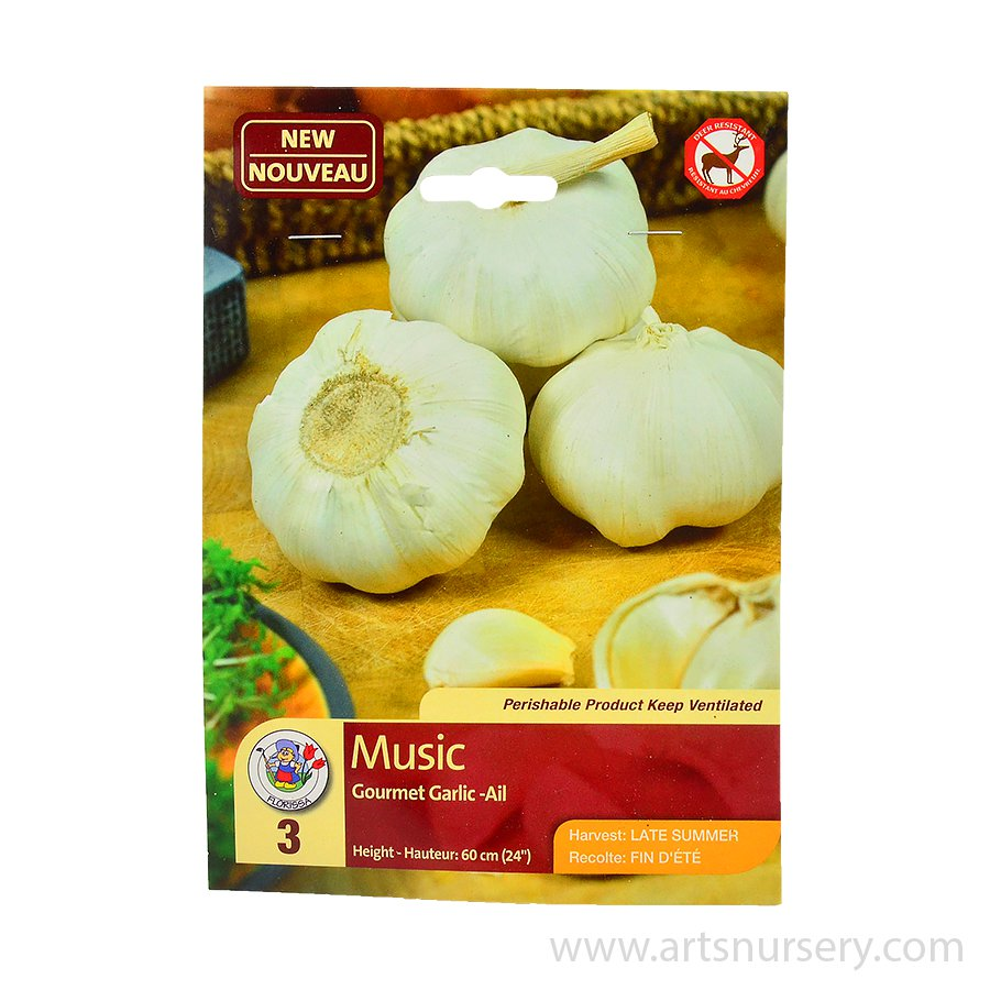 Garlic 'Music' Bulbs