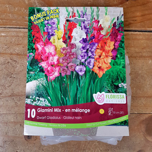 Gladiolus Glamini Mix Bulbs